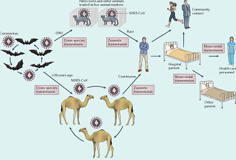The emergence of severe acute respiratory syndrome coronavirus (SARS-CoV) and Middle East respiratory syndrome coronavirus (MERS-CoV)