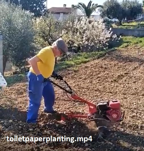 toiletpaperplanting.mp4